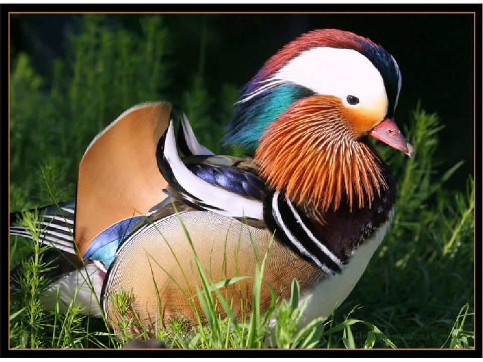 Животные и птицы красной книги россии фото