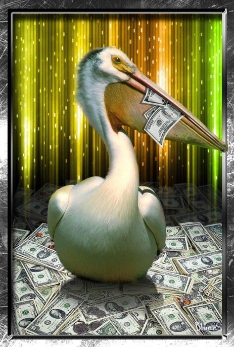Картинка пеликана для работы