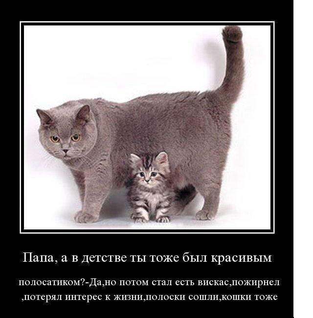 Демотиватор с кошками экс-солистки блестящих