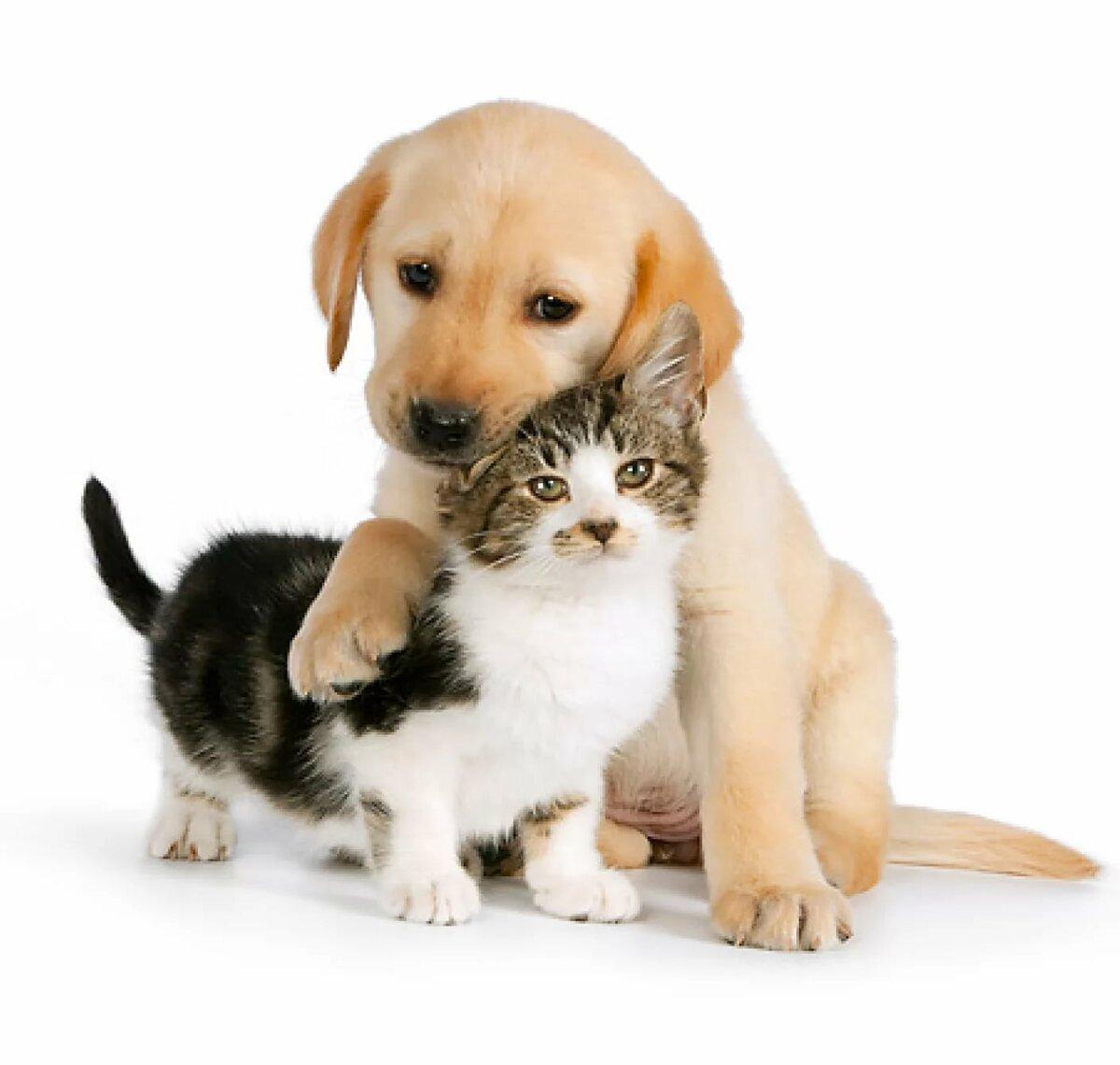 своем гифки собачки кошки подтверждают