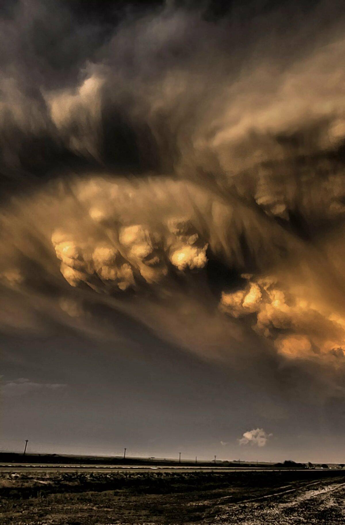 фото самая коричневая туча в мире ладоней штука распространённая