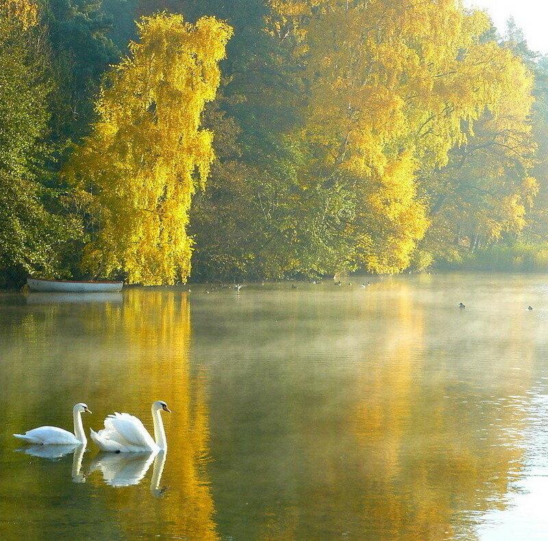 фото осень лебеди цены