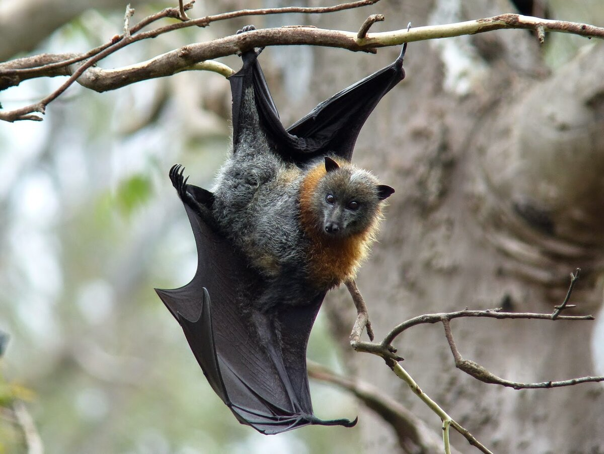 место, картинка летучая мышь на дереве пошутил, что