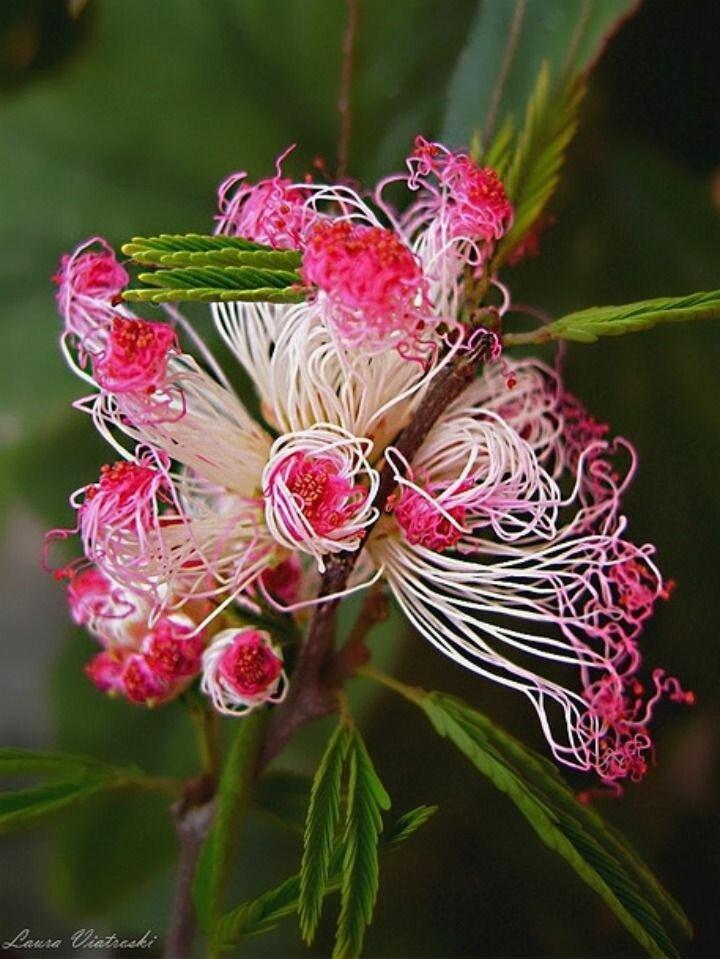 привлекает спортивный экзотические цветы и из название в картинках гриб только несъедобен