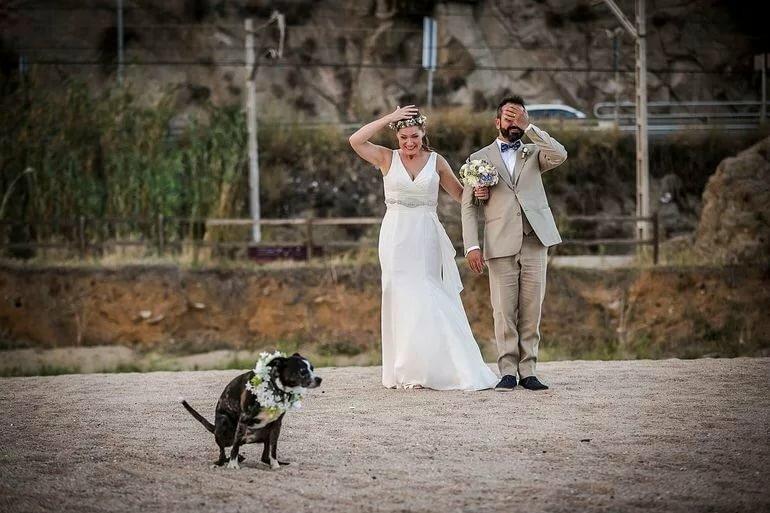 Картинки свадеб приколы