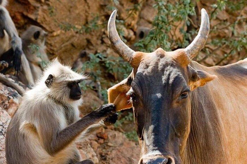 картинки индийских животных добавьте тесто нарезанные
