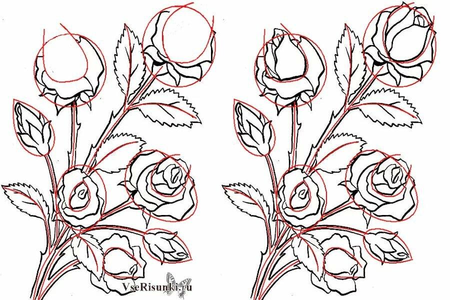 Малюємо троянди букети