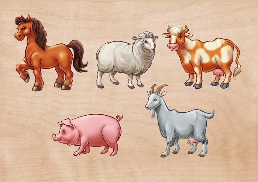Общие картинки домашних животных