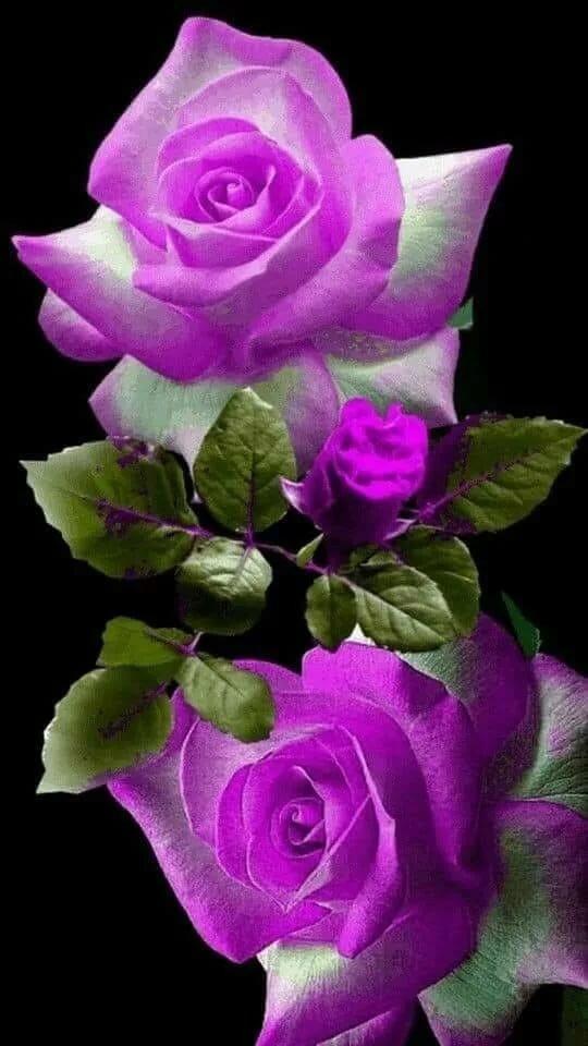Картинки на телефон розы с анимацией, надписью группа