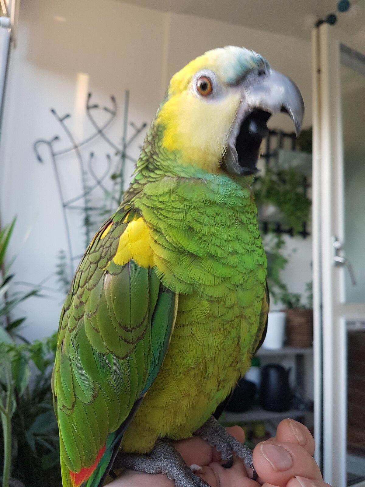 прикольные попугаи фото