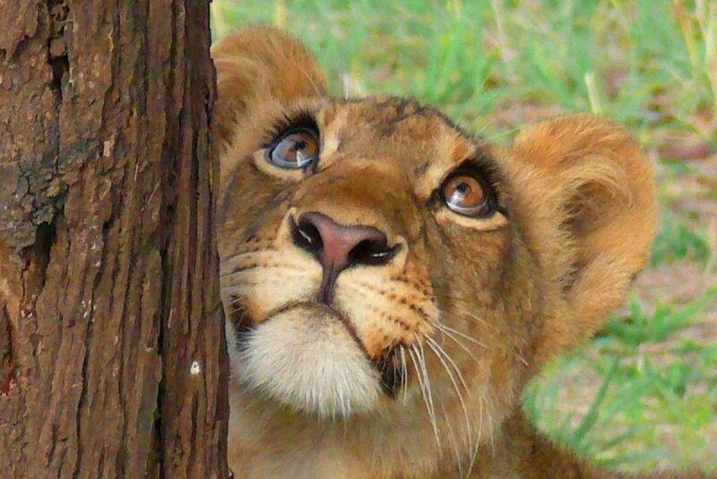 Рождением, приколы львы картинки с надписями