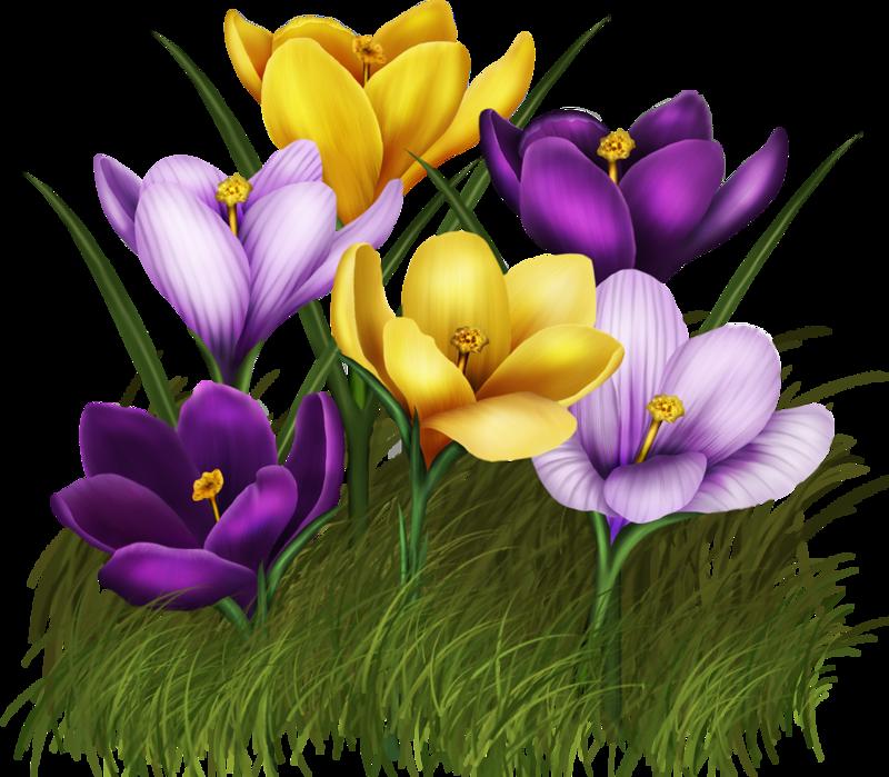 весенние цветы картинки для оформления ранних
