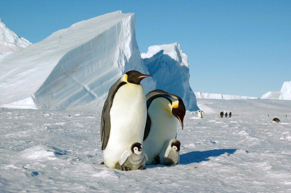 говорить, животные арктики фотографии животных антарктиды увидите