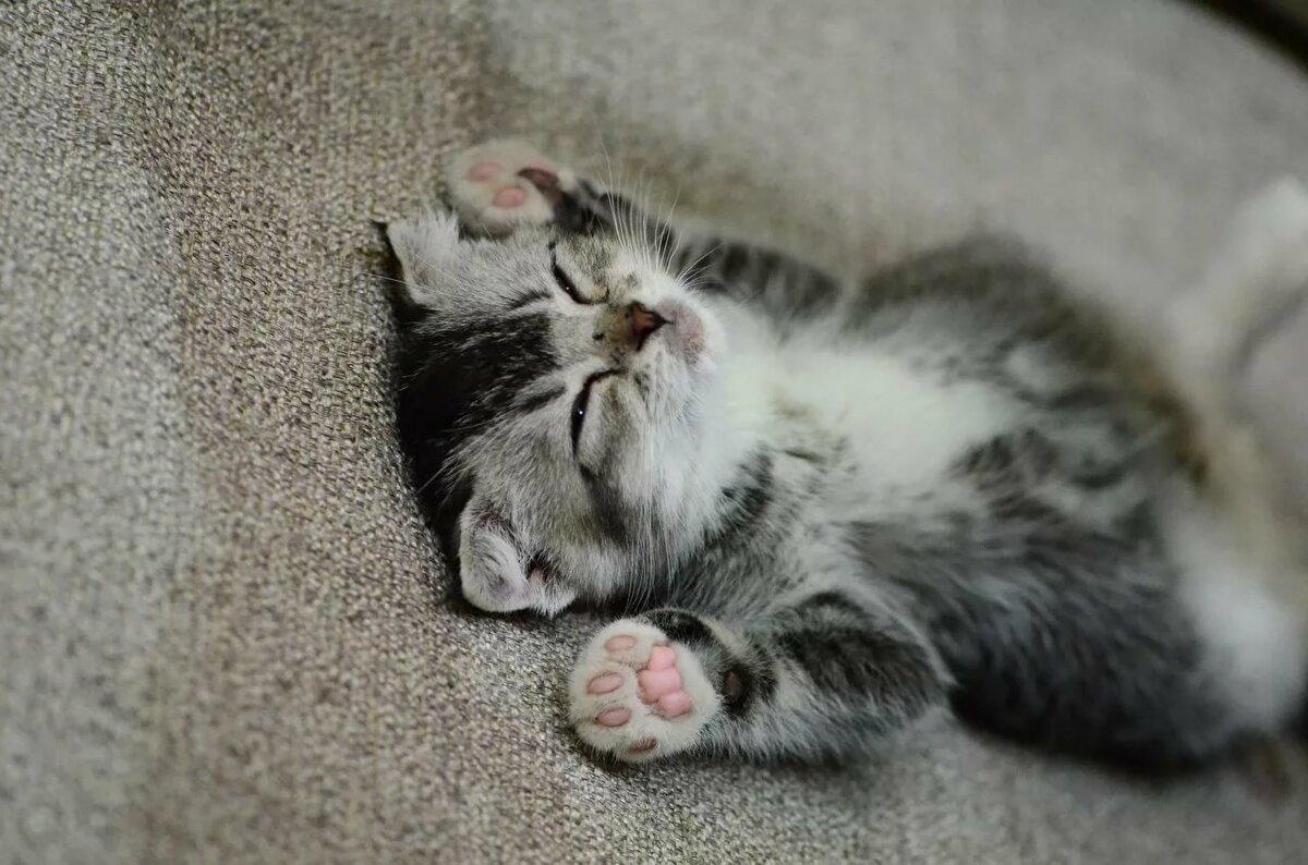 Картинка спящий котеночек