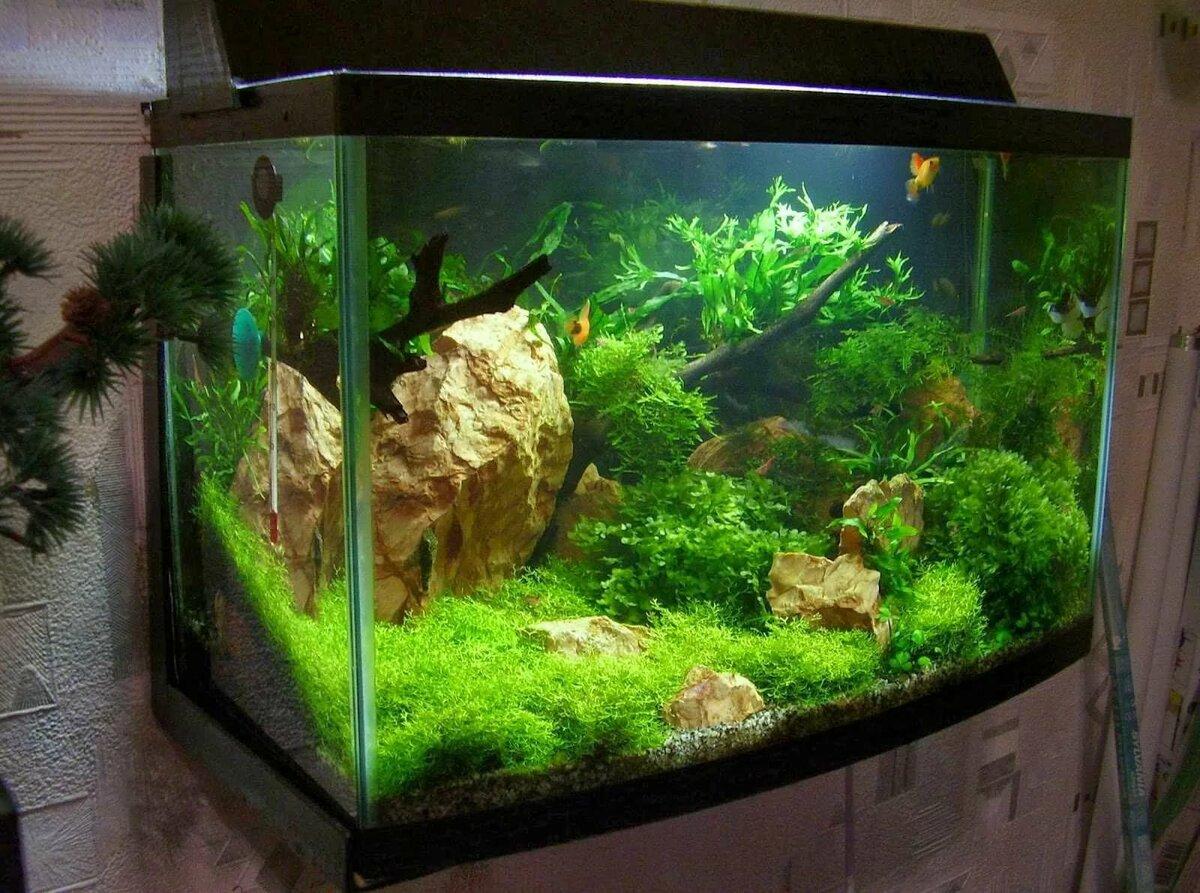 картинки с видами аквариумов вспоминает, что никогда
