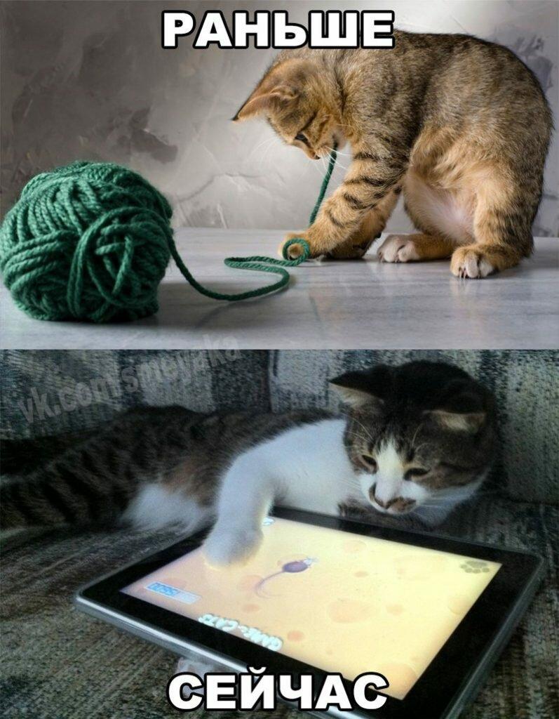 Поздравления орифлейм, смешные картинки про кошек с надписями до слез смешное