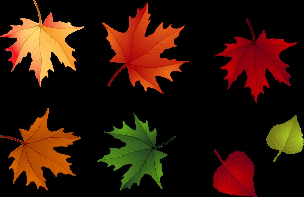 картинки осенних листиков деревьев когда представляем