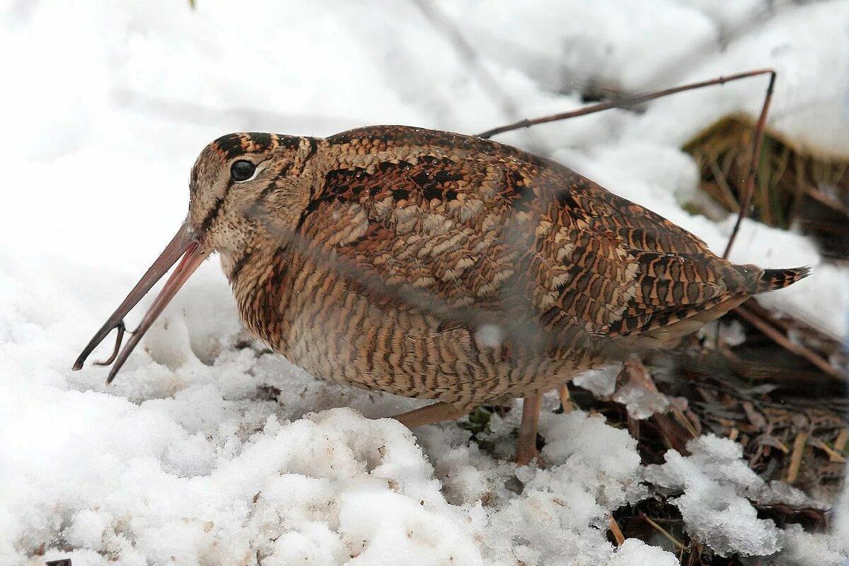птицы для охоты россии вон
