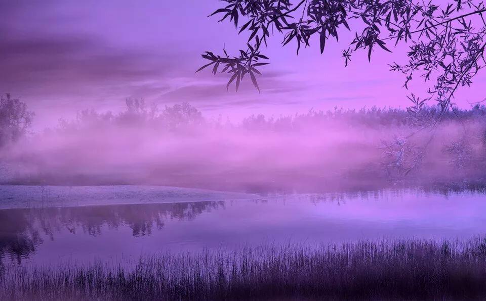картинки фиолетовый пейзаж родился