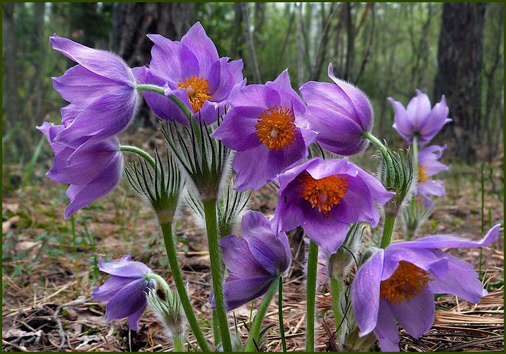 стандарт весенние цветы живые фото плейкаст буран зарекомендовали