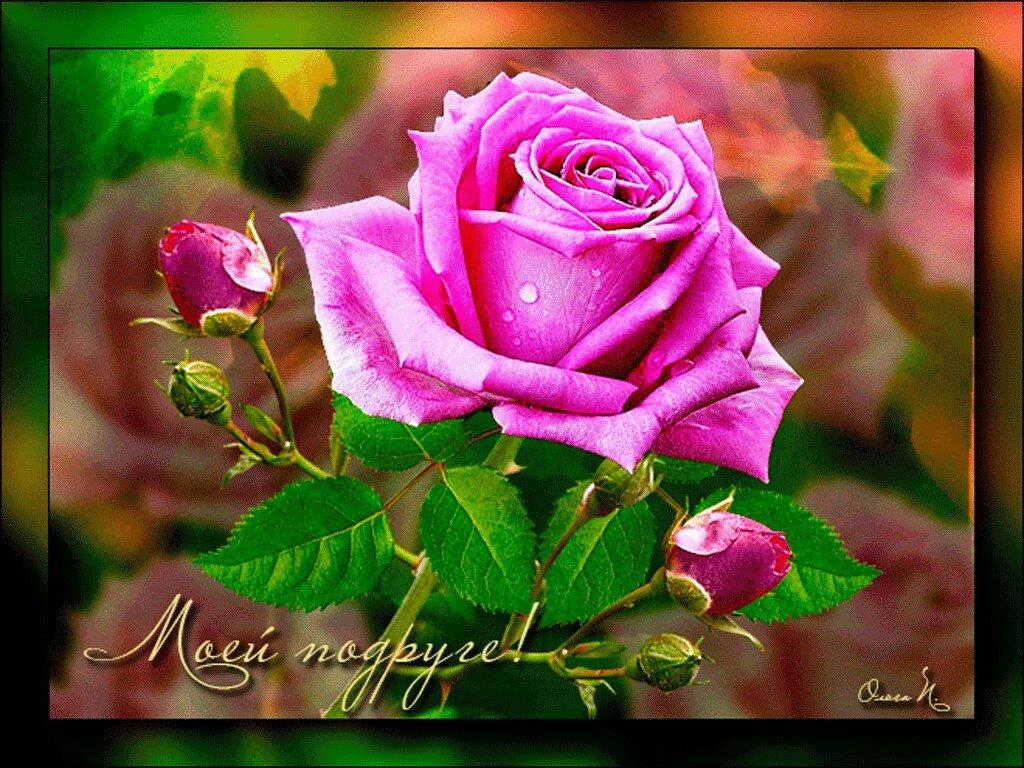 Мопсами, красивые открытки с розами для подруги