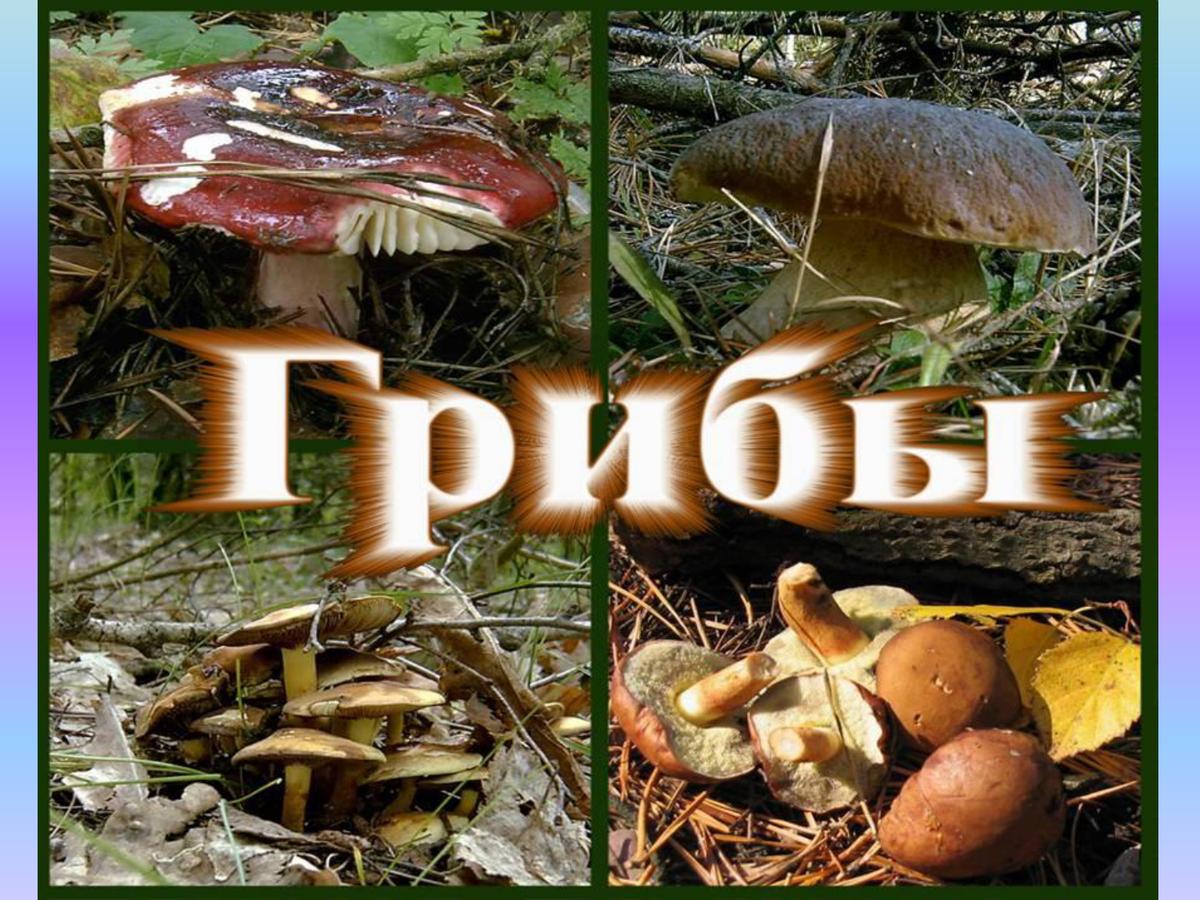 Картинка с надписью грибы, добрым