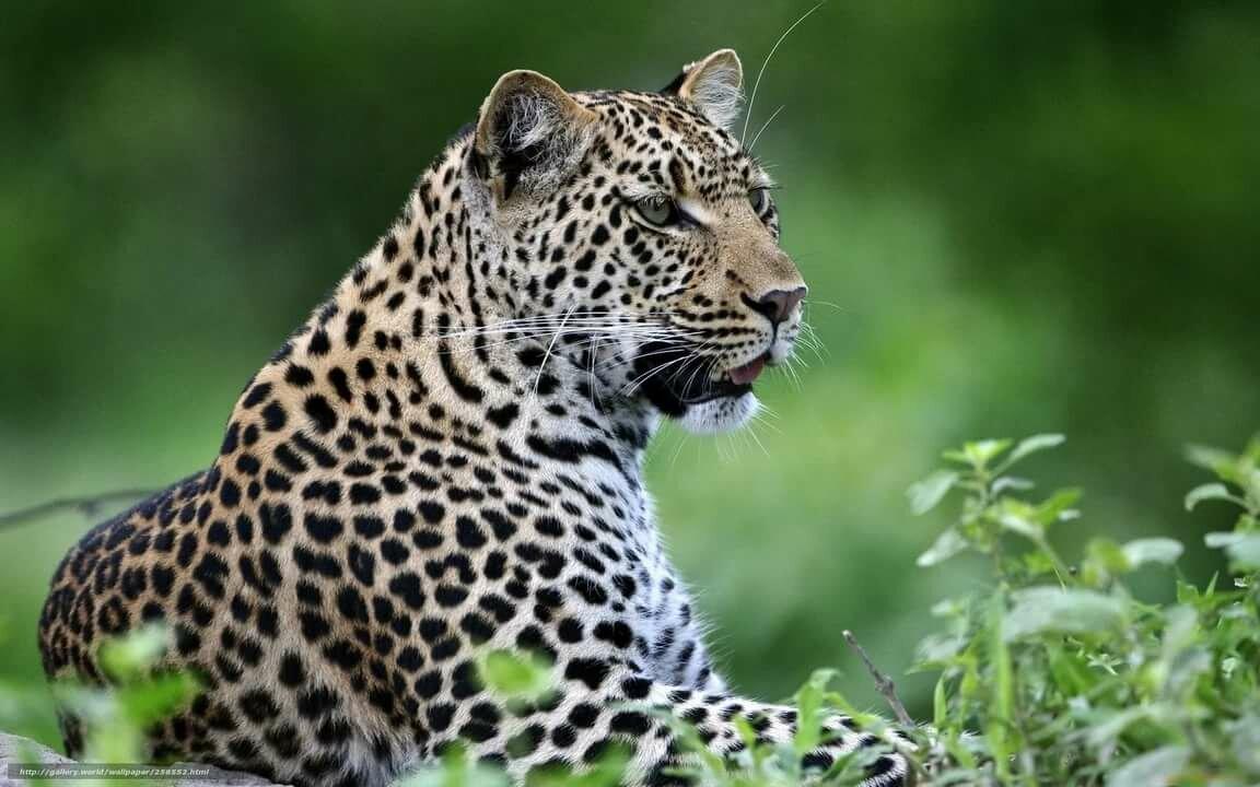 идея красивые картинки животного мира сфотографировать