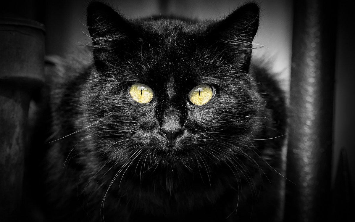 Фото черные картинки, лозунги картинки красивые
