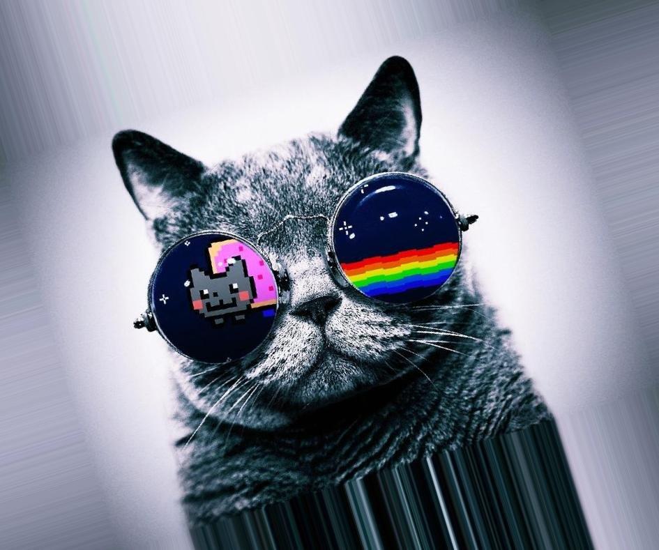 Крутой кот картинка