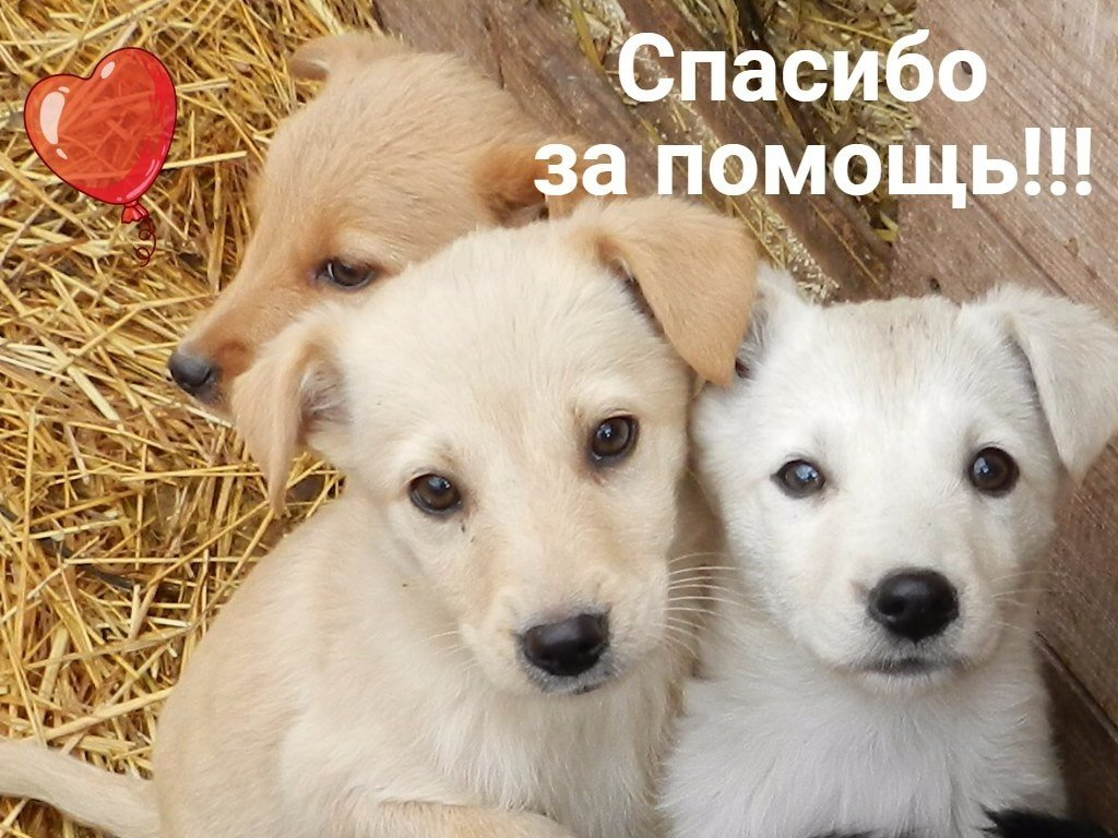 Картинки с собаками спасибо