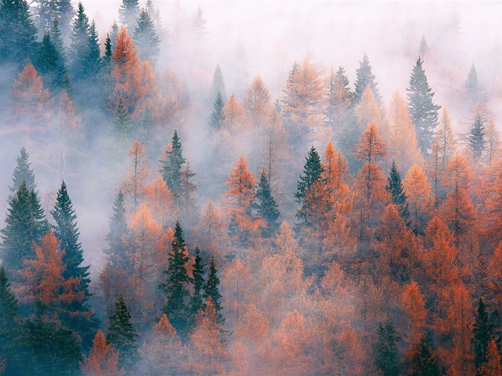 Осенний лес заполнен туманом