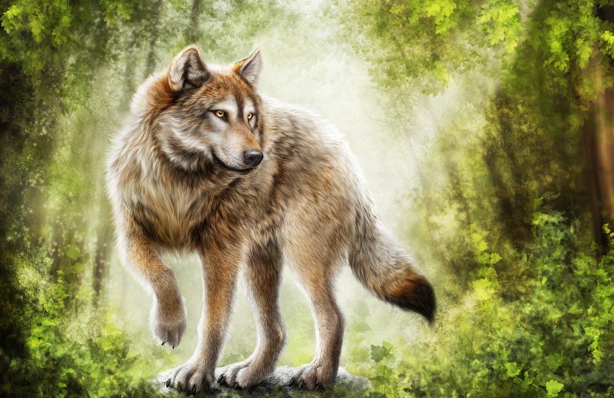 Нарисованные волки своими руками фото 23