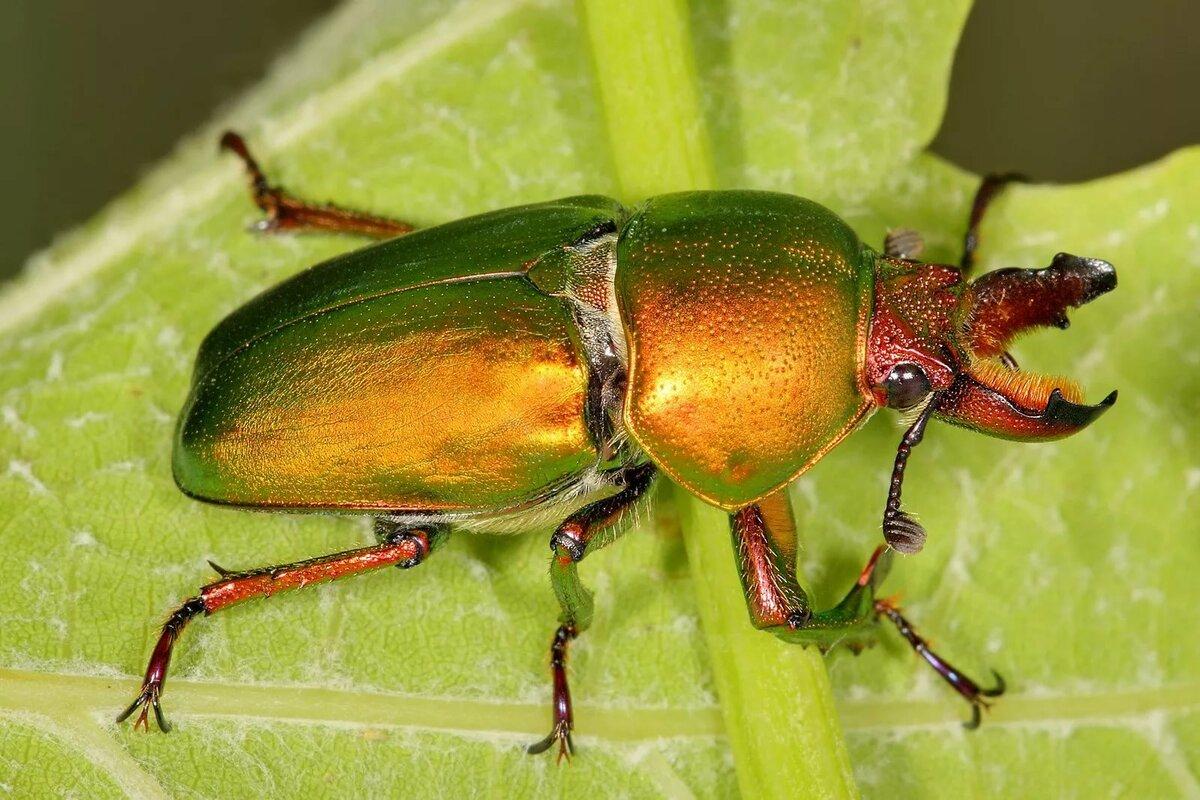 жуки картинки и фотографии