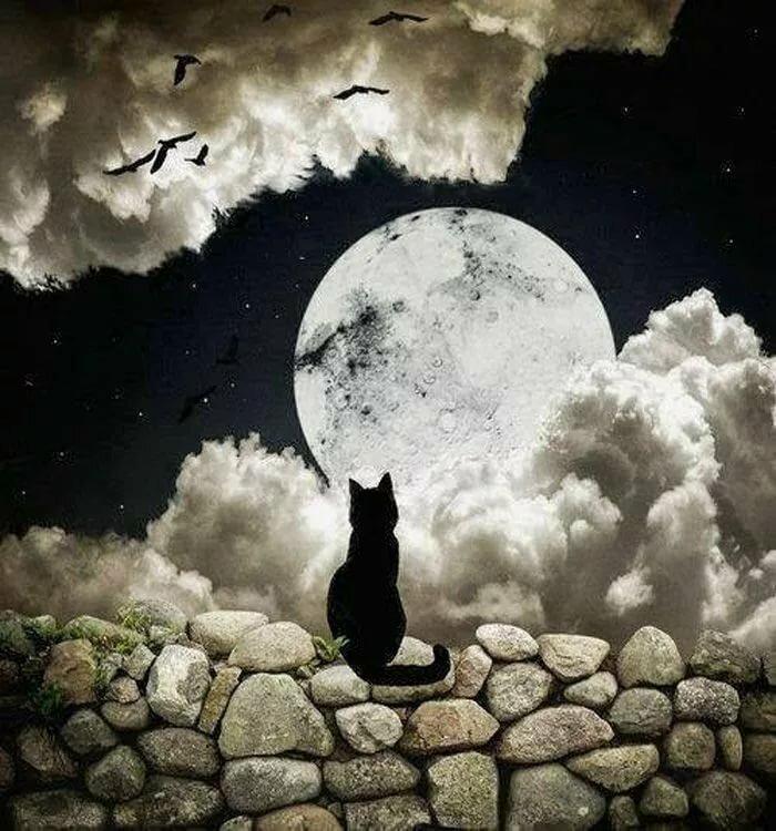 фото кота смотрящего на луну