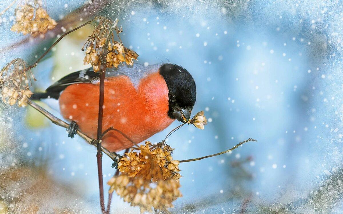 Открытки зимы фото