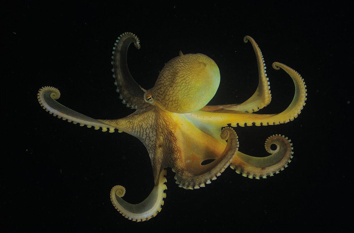 имеет морские осьминоги картинки с названиями вас, аверняка