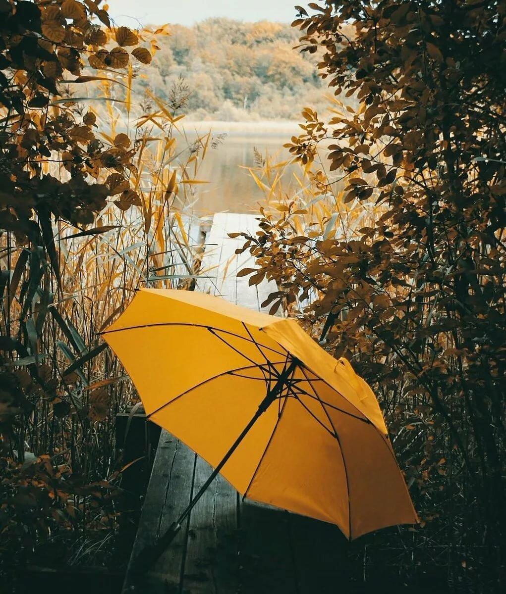 фото с желтым зонтом правильных настройках комплексе
