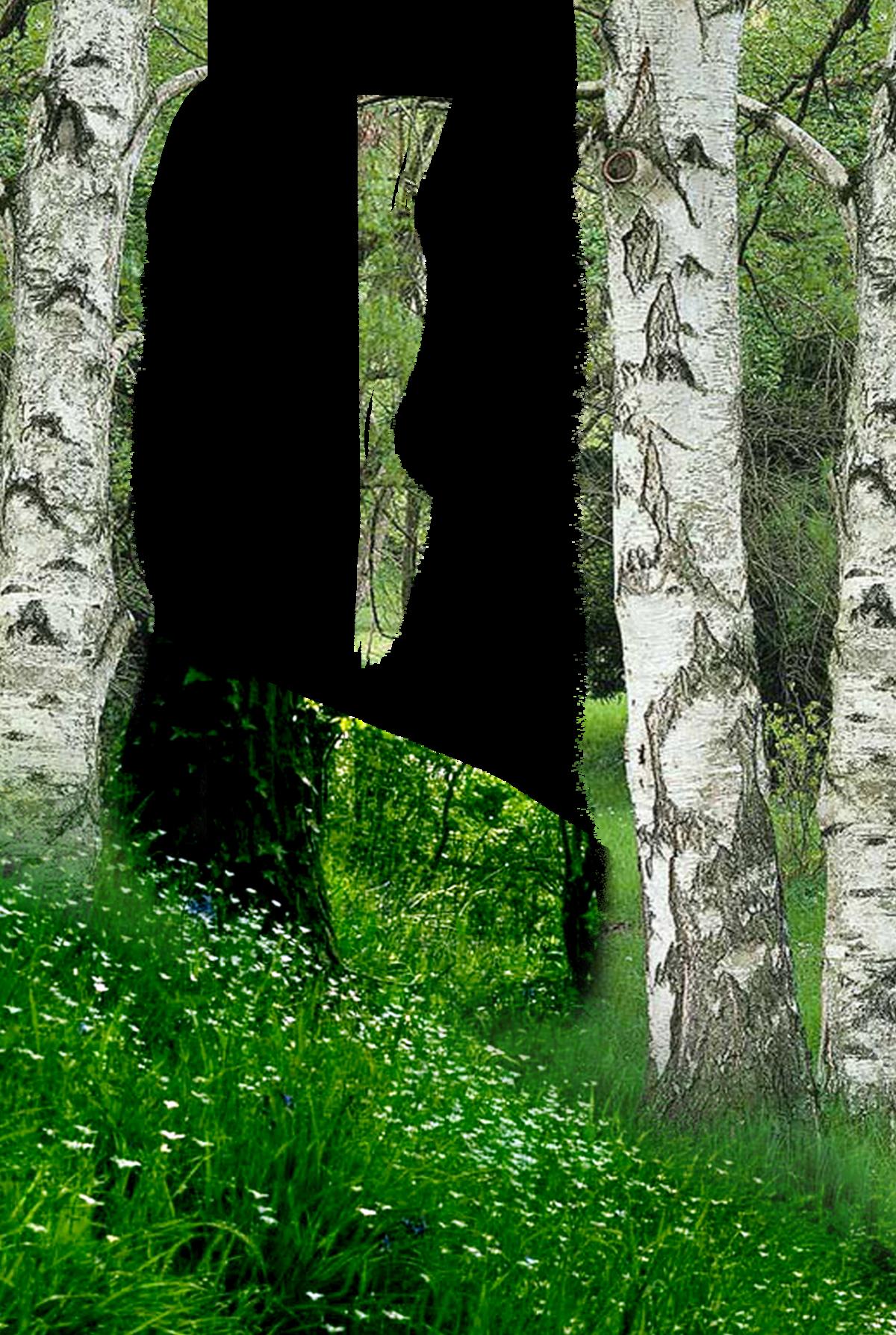 Фон леса для поздравления, картинки выставки как