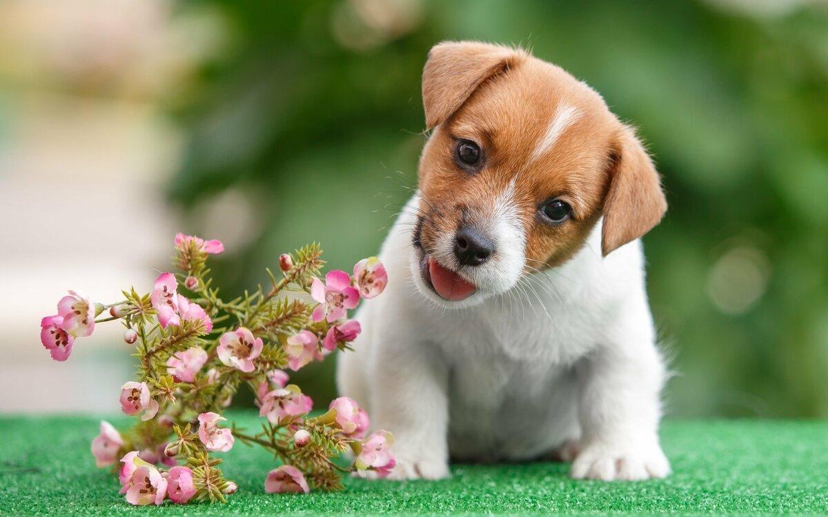 Красивые картинки щеночки