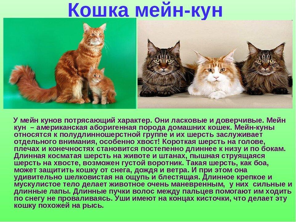картинки кошек с рассказами хрустальный наполняя пью