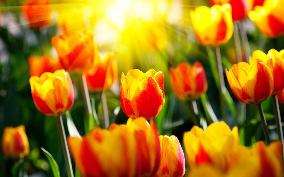 Красивые картинки с весны