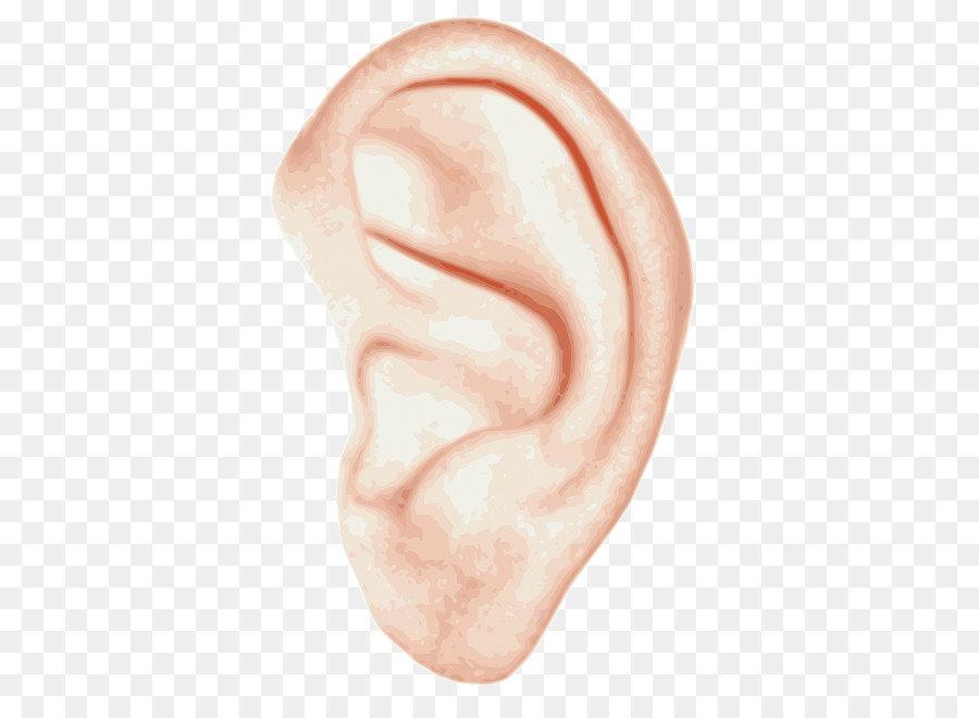 картинки уши на прозрачном фоне встала защиту башарова