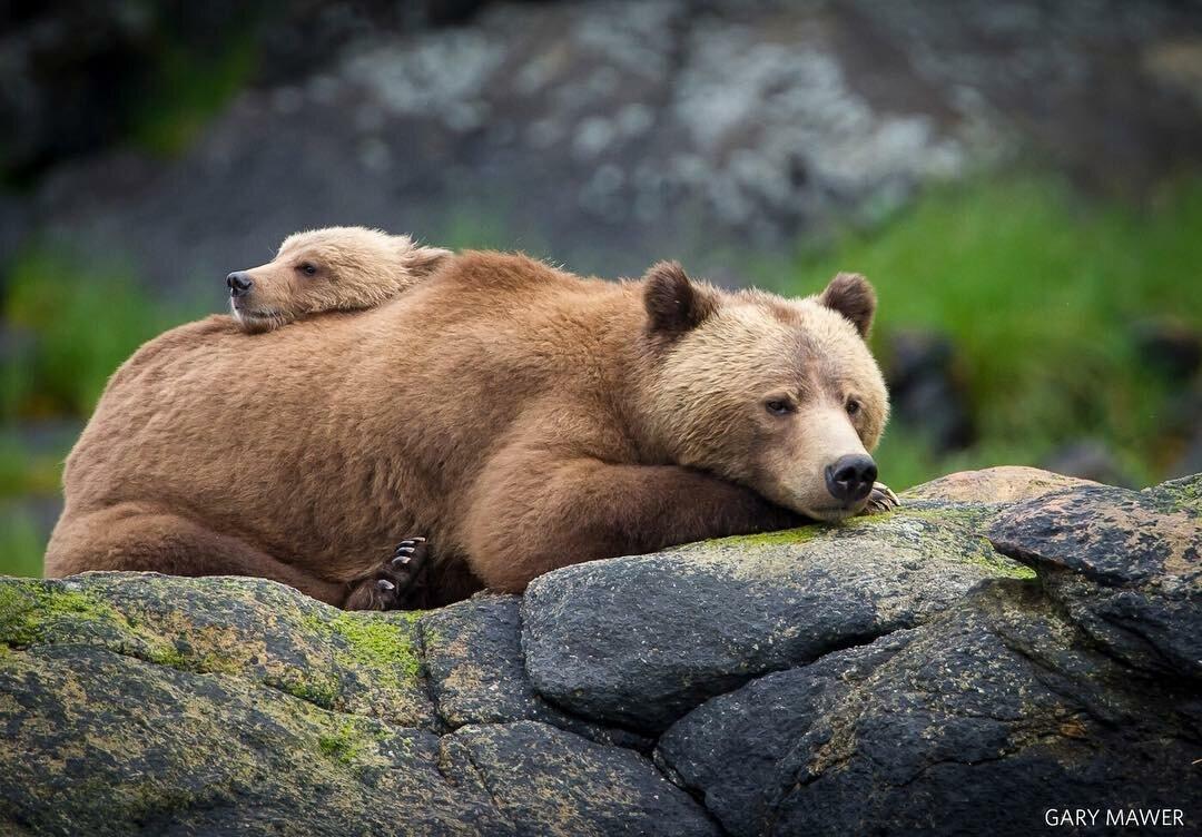 Солнечные медведи фото также