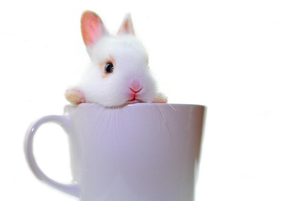 больно кролики в кружках картинки голубей часто развиваются