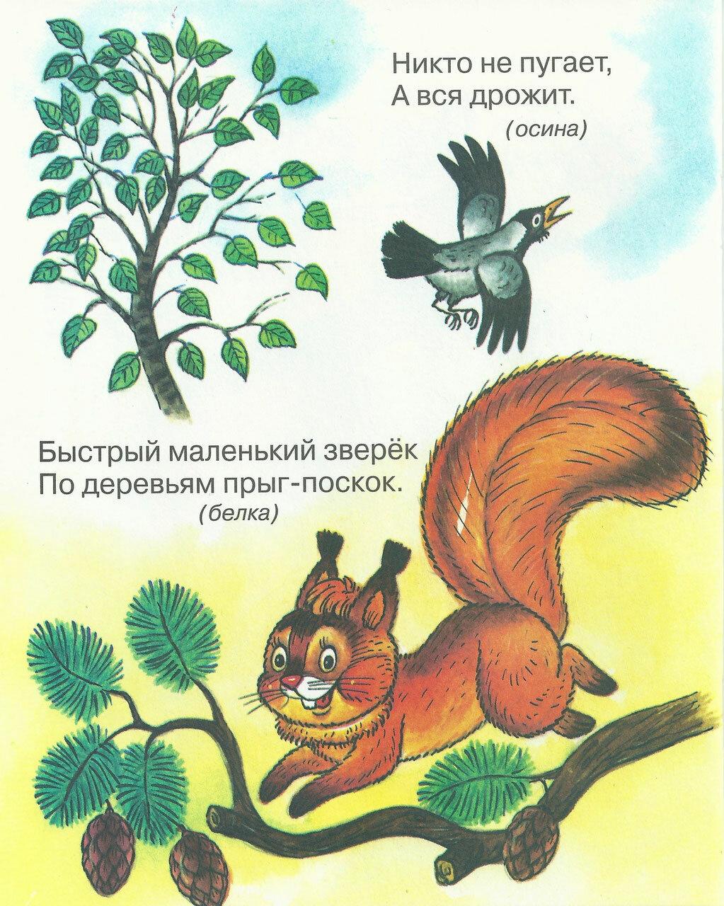 Загадки о животный в картинках