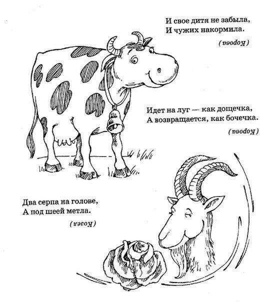 Загадки о животных картинки
