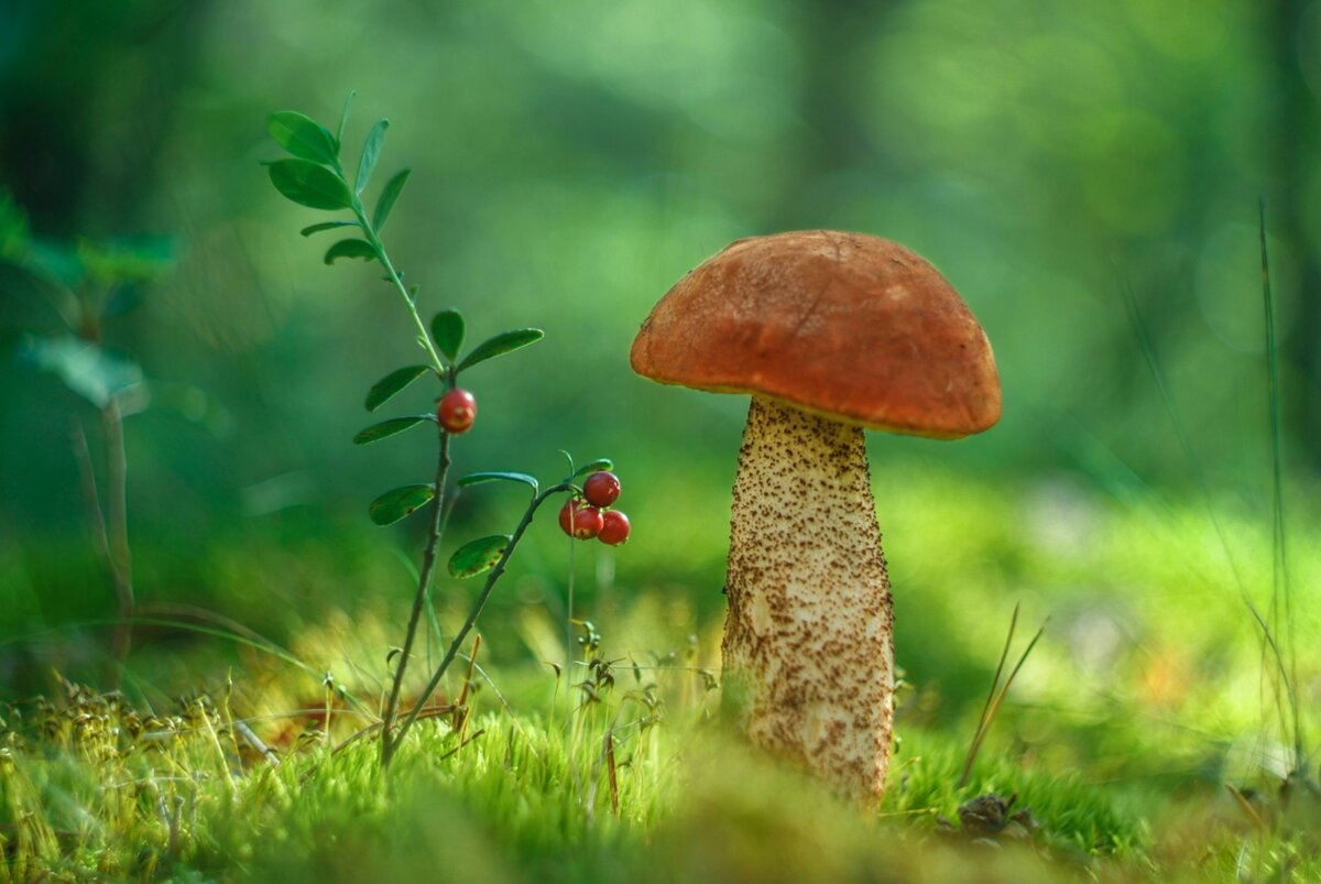 Все картинки про грибы