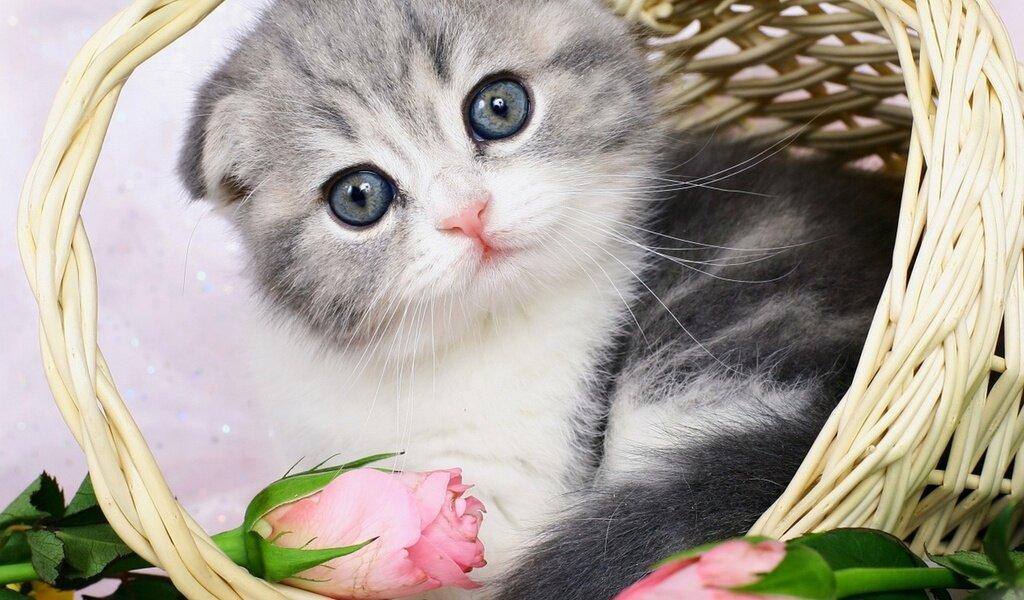 Фото котят скучаю
