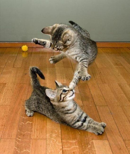 Смешные приколы про кошек в картинках, для мужчин смешные