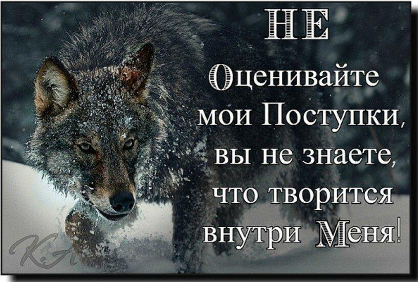 Картинка про волков с надписями со смыслом
